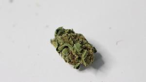 cannabis-industry