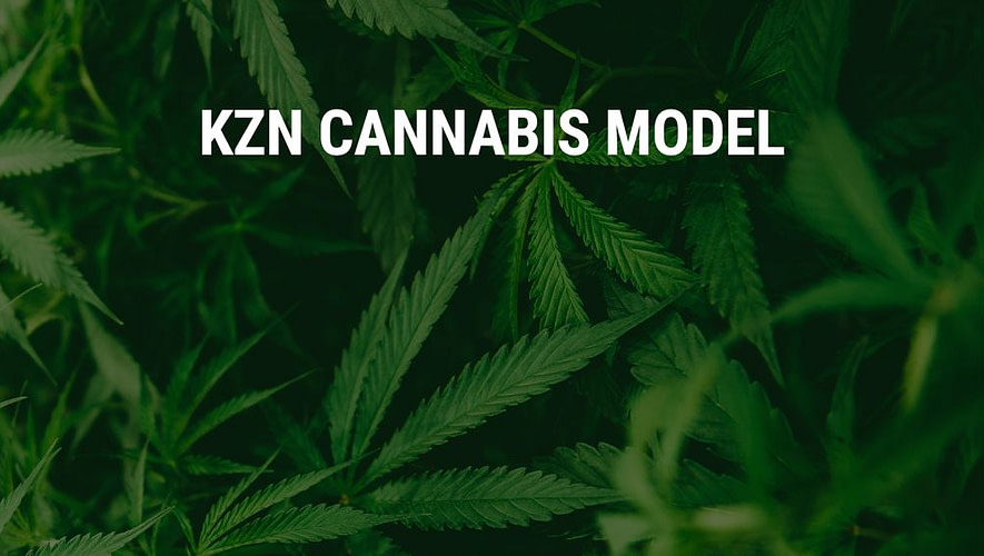 kzn cannabis model