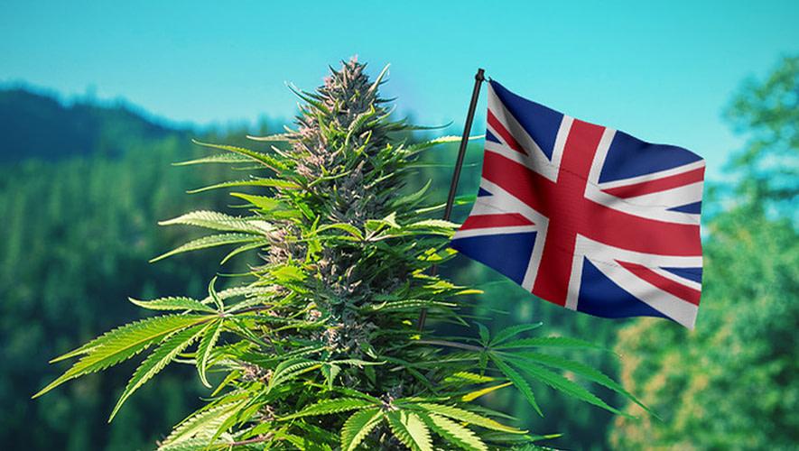 African cannabis UK export; UK CBD Market