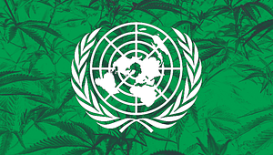 UN cannabis ruling, marijuana Legalization, Cannabis News, Cannabiz Africa
