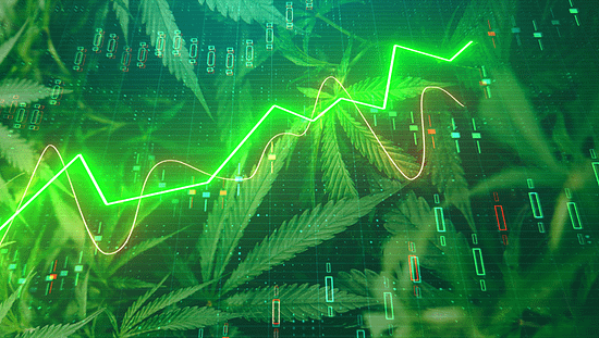 cannabis stocks, cannabis africa, invest in cannabis, Post-Pandemic Momentum Gains