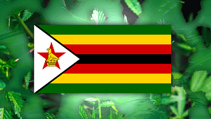 Zimbabwe hemp export Plans, Zimbabwe Flag,