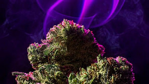 Cannabis Strain Names Meaningless