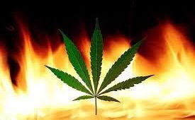 Nigeria Cannabis Reform