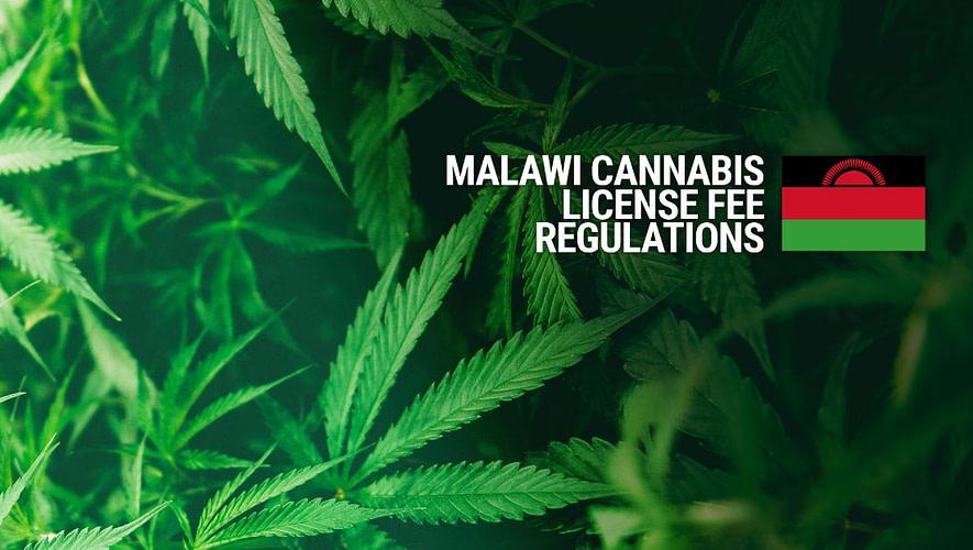 Malawi Cannabis Licence Fees