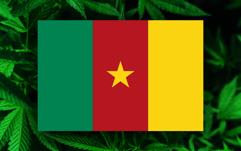 Cameroon cannabis scam,