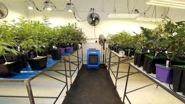 the haze club (THC), cannabis bust cape town, south africa cannabis raid, legal cannabis cape town, SA Cannabis Clubs Showdown