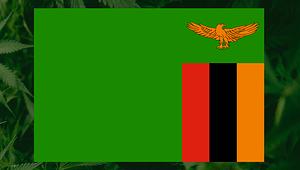 Zambia Cannabis