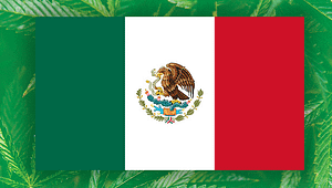 Mexican Senate finally says Yes to Legalization, cannabiz africa, cannabis industry news, Mexico Cannabiz Legalization Guidelines