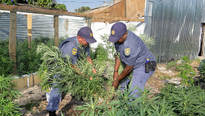 difference between dagga and hemp,