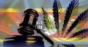 eswatini cannabis licensing, cannabis law