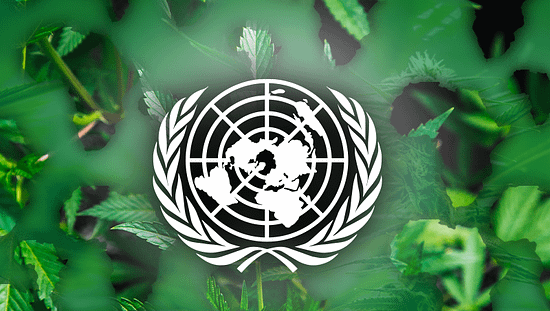 un cannabis ruling, african cannabis industry, cannabis legalization