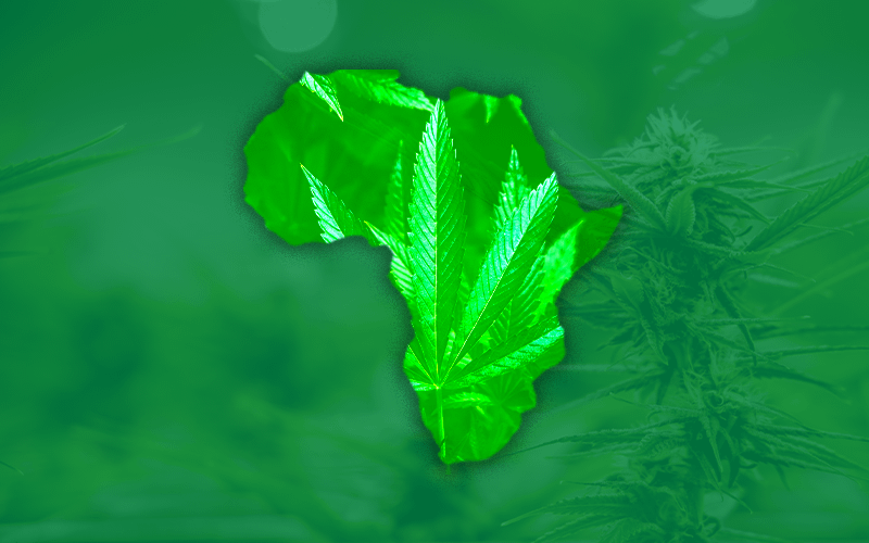 5 Ways for Africa Unlock its Cannabis Potential, cannabiz africa, african cannabis news, Africa cbd guide