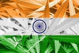 india cannabis reform