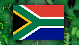 South Africa Cannabis License, SA Cannabis Personal Use Bill, SA Recreational Cannabis law, Legalize, Dagga News; SA Cannabis Tax 12J