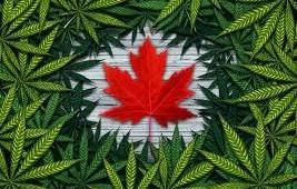 Canadian Cannabis Glut